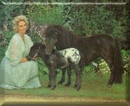 Lady Fisher & Merenita w/her foal