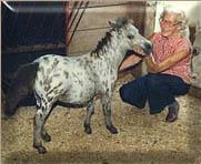 Zola Johnston foundation breeder